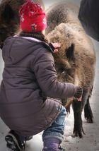 Das Mädchen und das Wildschwein