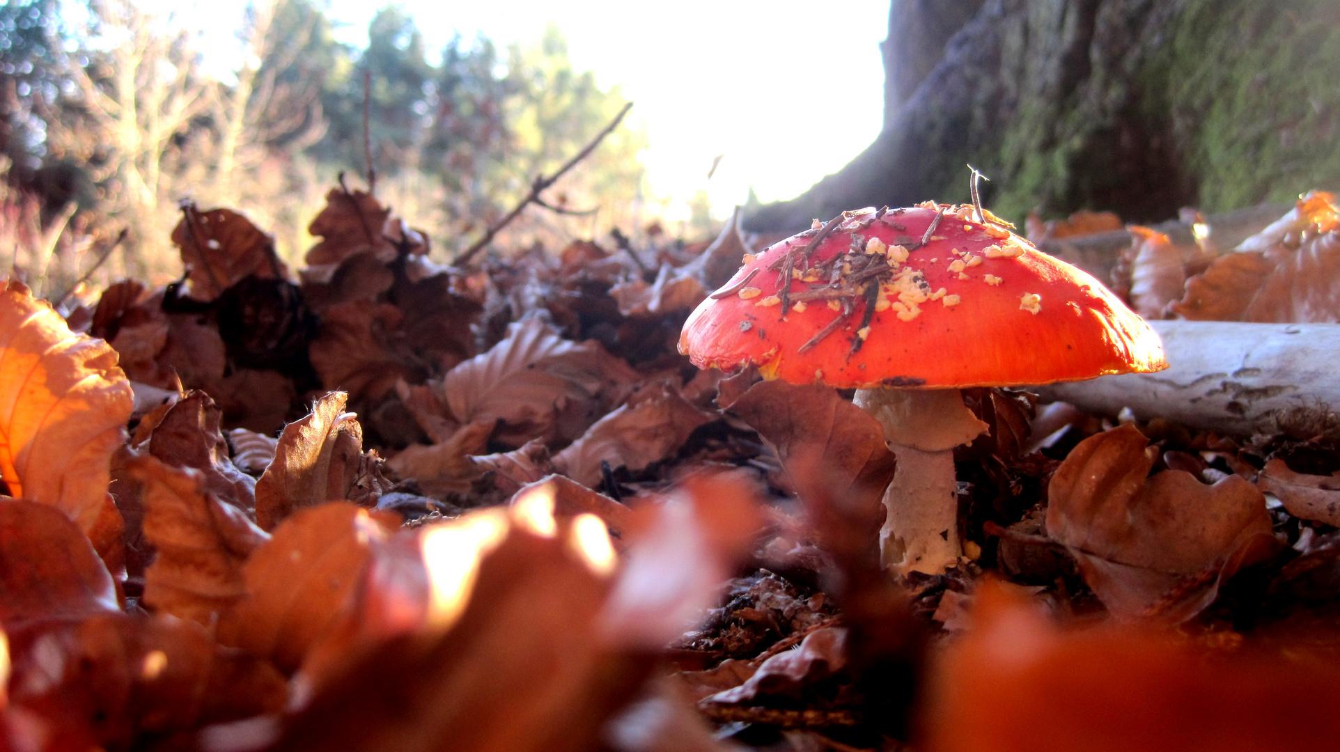 Das Männlein im Walde