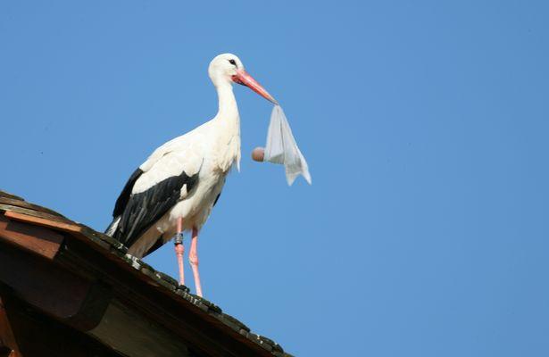 Das Märchen vom Storch