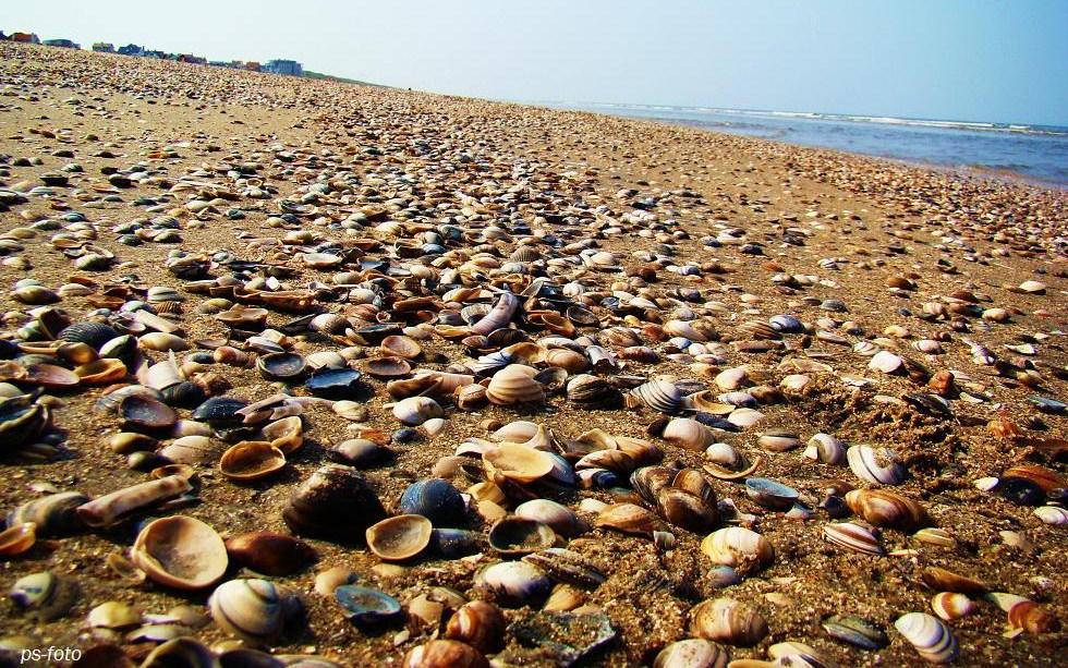 Das Meer, Muscheln?