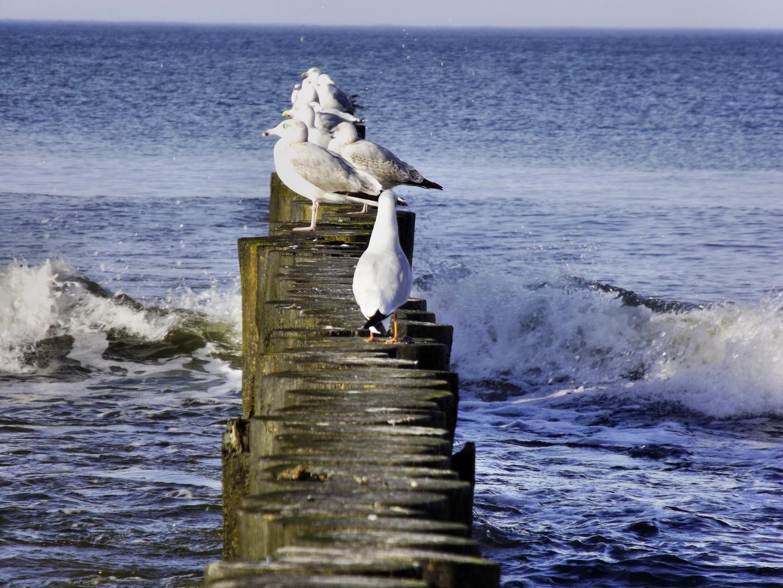Das Meer und die Möwen