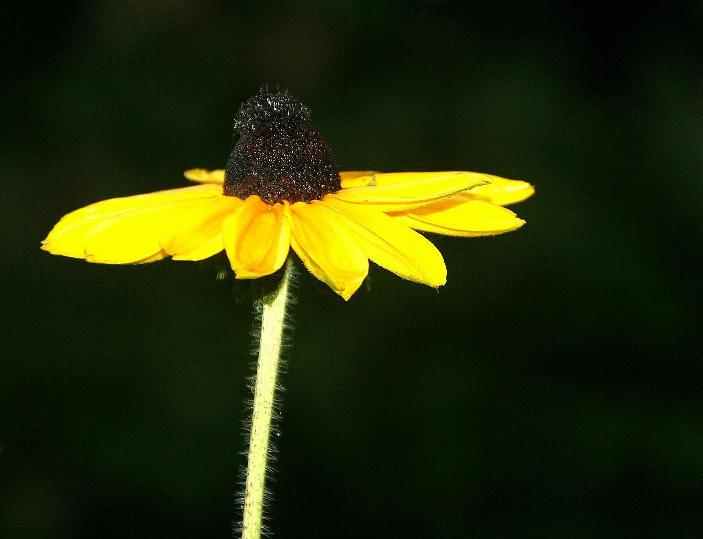 Das Mittwochsblümchen .....