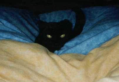 Das Monster im Bett! <Molli>