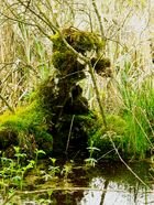 Das Monster im Sumpf