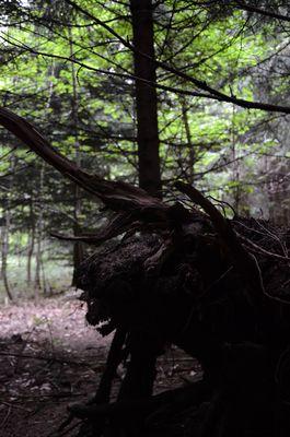 Das 'Monster' im Wald