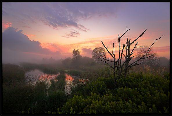 Das Moor am Morgen
