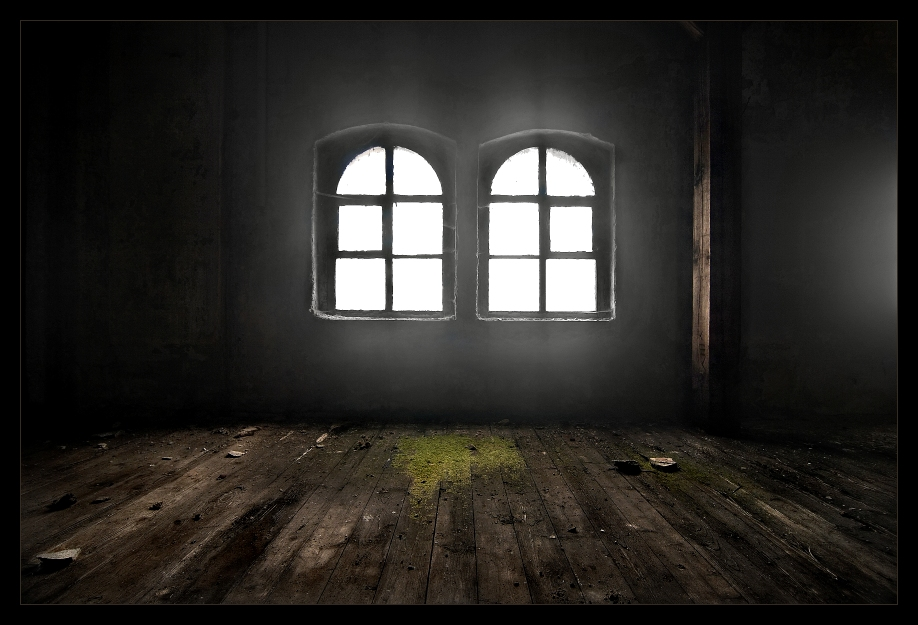 Das Moos am Fenster