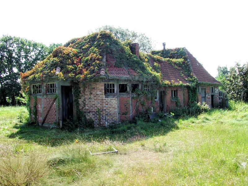 Das Naturdach
