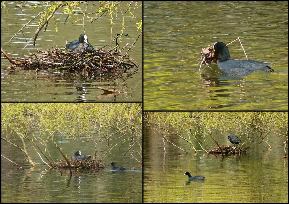 Das Nest ...