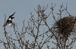 das Nest ist fast fertig!