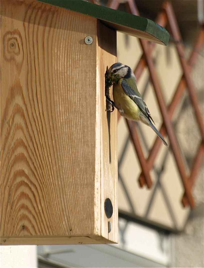 Das nest wird fleissig ausgebaut!
