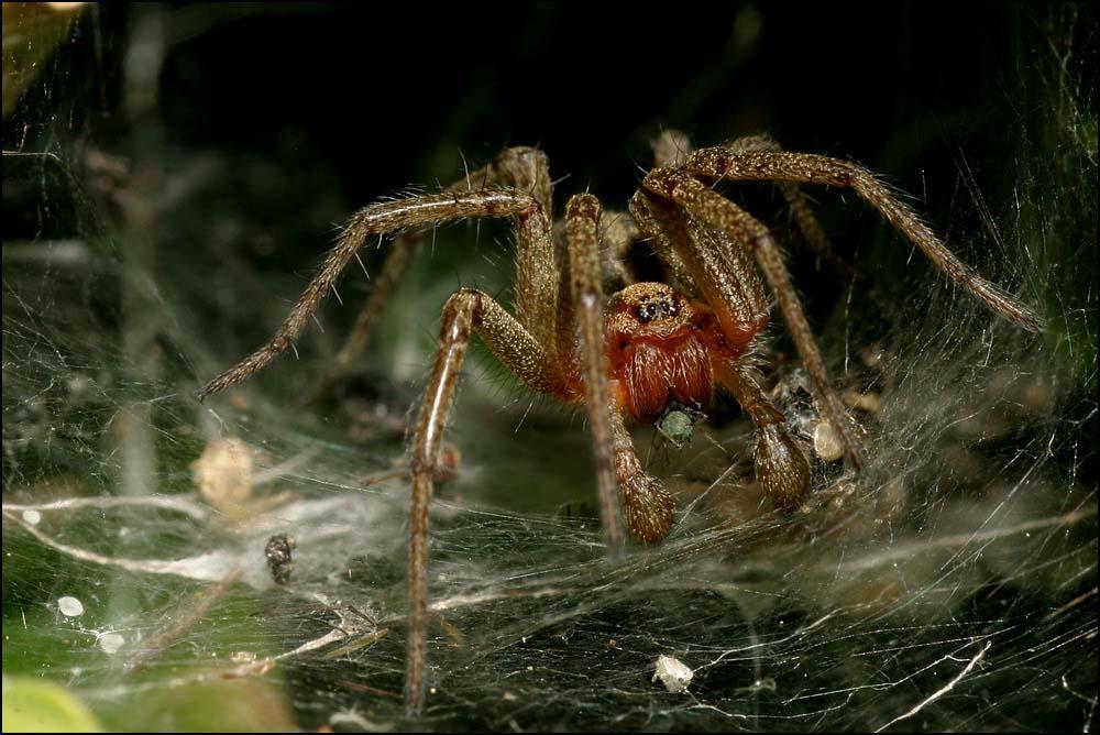 Das Netz der Spinne