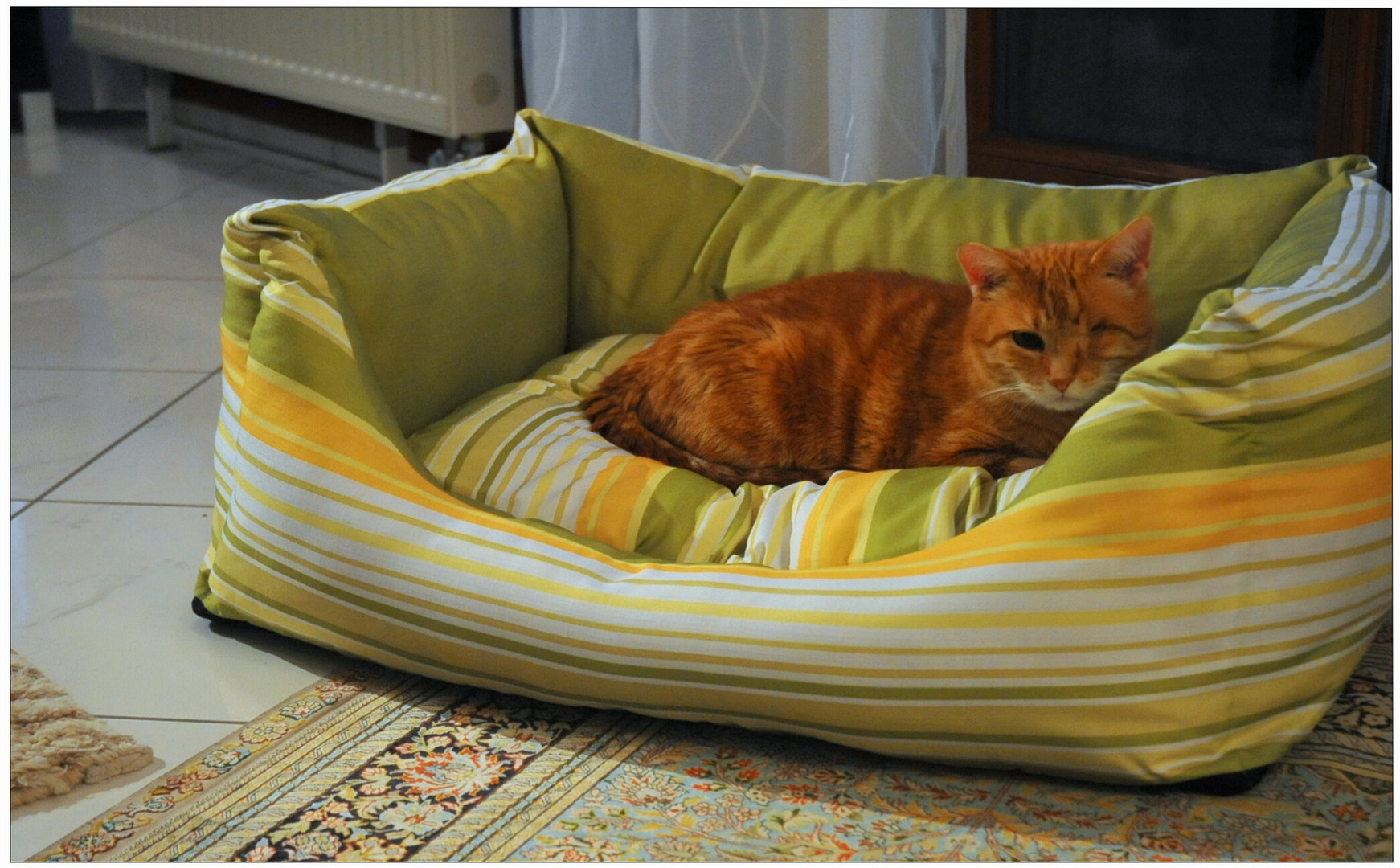 Das neue Bett für Wicky - Emily (la nueva cama para Wicky -Emily)