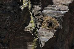 Das neue Nest ...