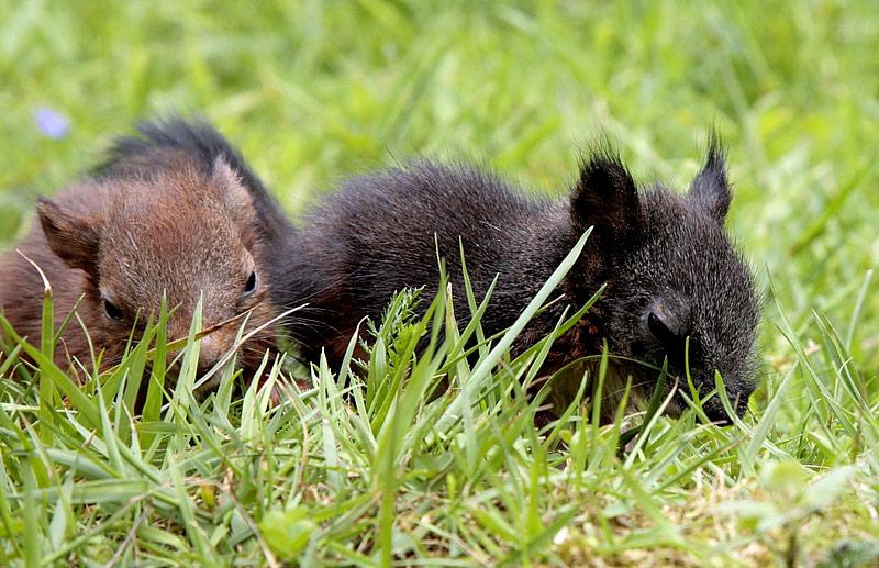Das Neueste Foto von A u.B -Hörnchen