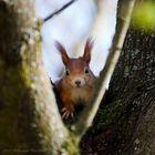 Das neugierige Eichhörnchen