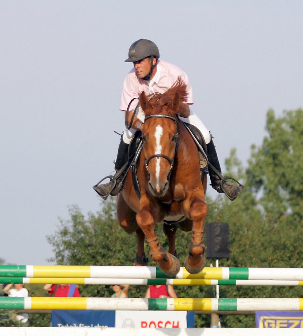 Das neugierige Pferd