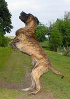 Das Niedersachsen-Ross als Hund
