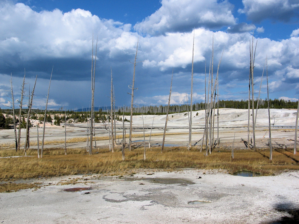 Das Norris Geyser Basin im Yellowstone - eine andere Welt