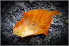Das orange Blatt