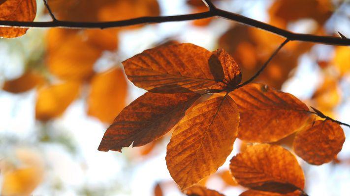 das orangene Leuchten im Wald