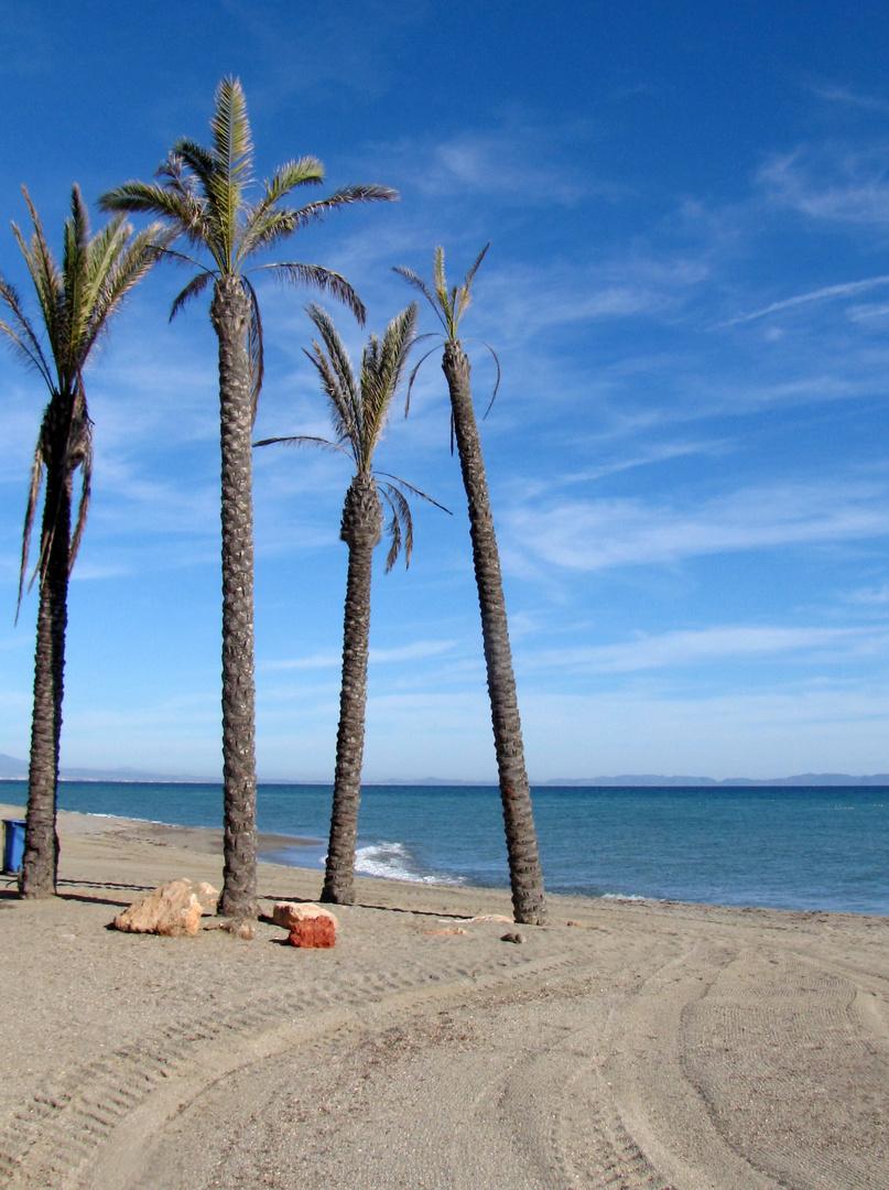 Das Palmensterben am Meer