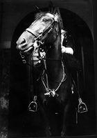 Das Pferd am Buckingham Palace