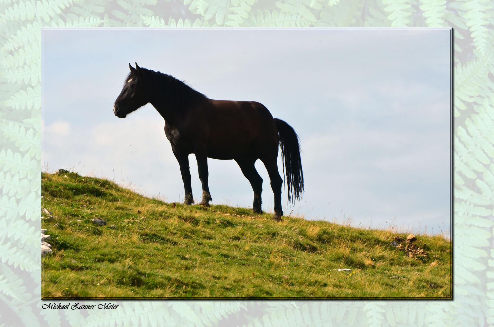 Das Pferd auf der Alm