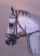 Das Pferd - Cran Montana 2013