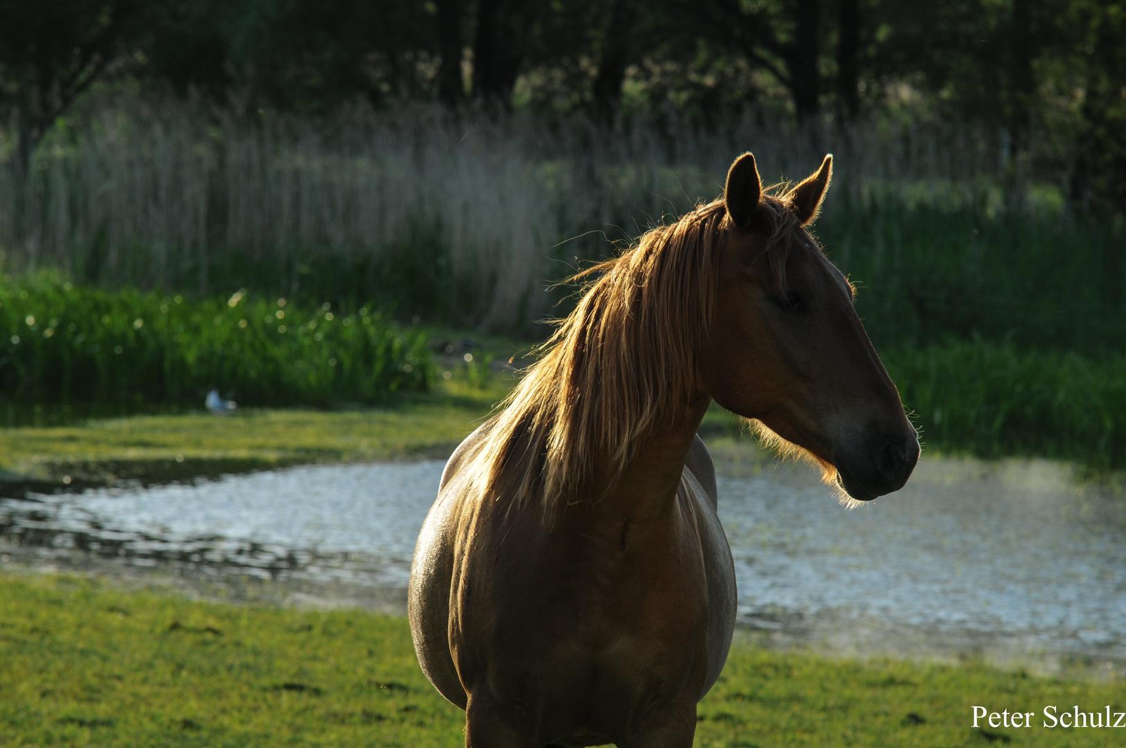 Das Pferd wurde in Sagen schon immer mit Feuer und Wasser in Zusammenhang gebracht.