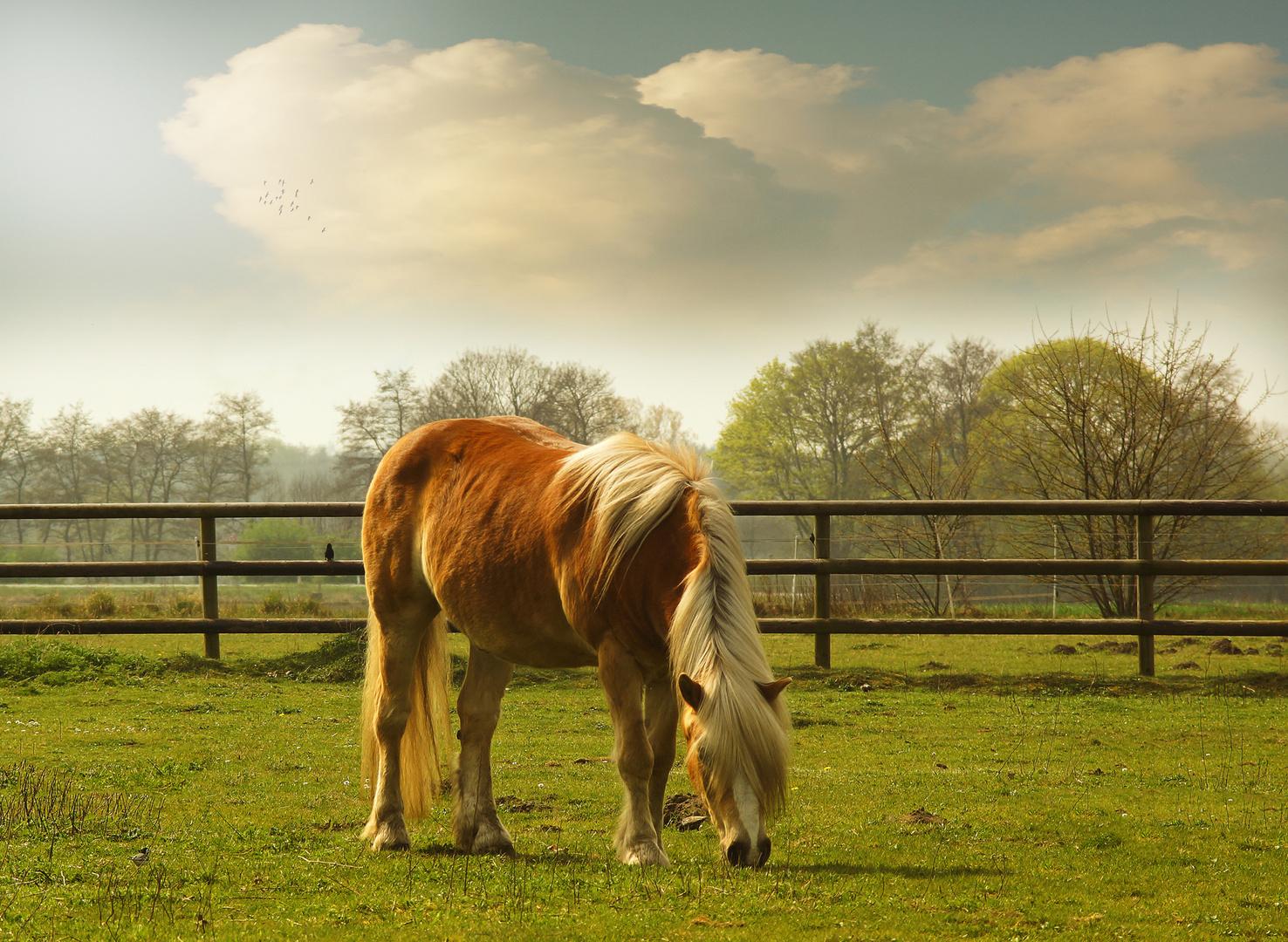 Das Pferdchen am Wegesrand