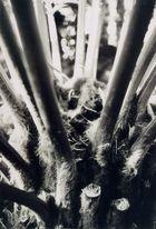 Das Pflanzenwesen...