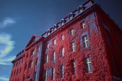 Das Pinke Rathaus