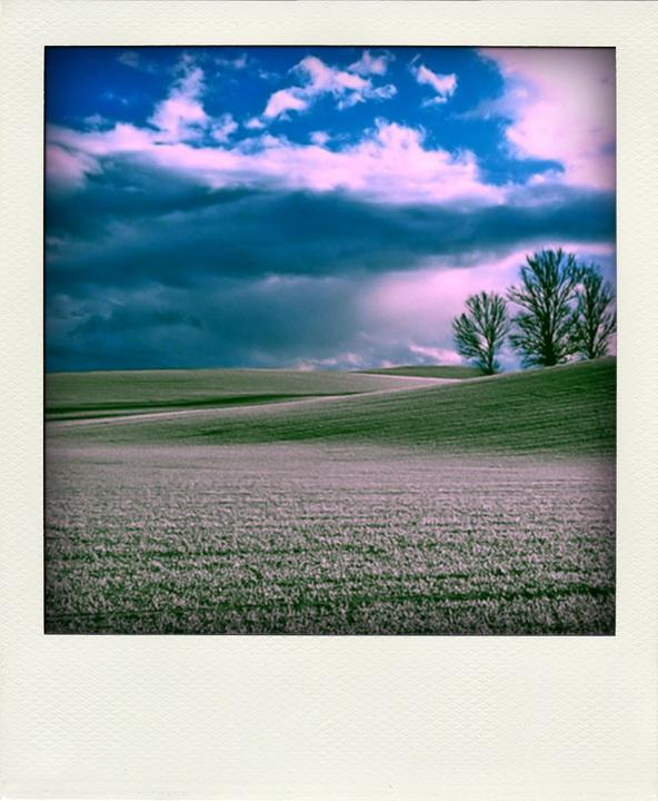 Das Polaroid-Feld