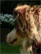Das Portrait eines Hundes...