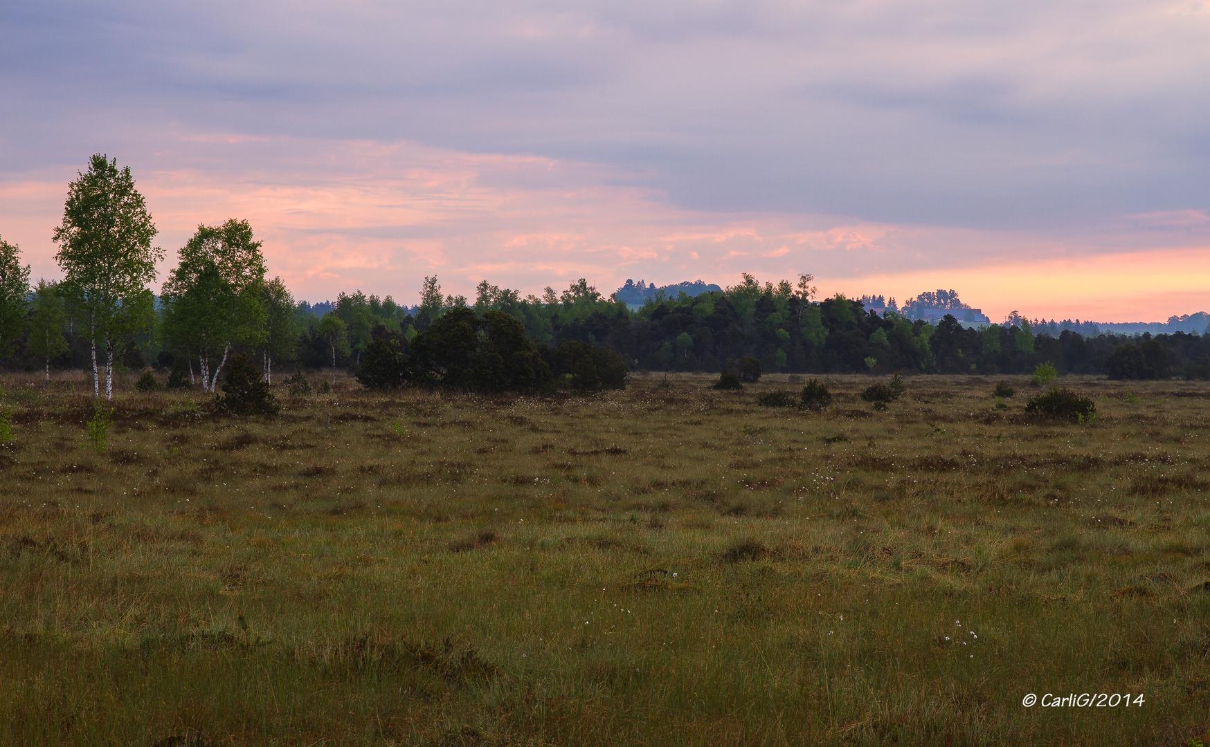 Das Ried am an frühen Morgen