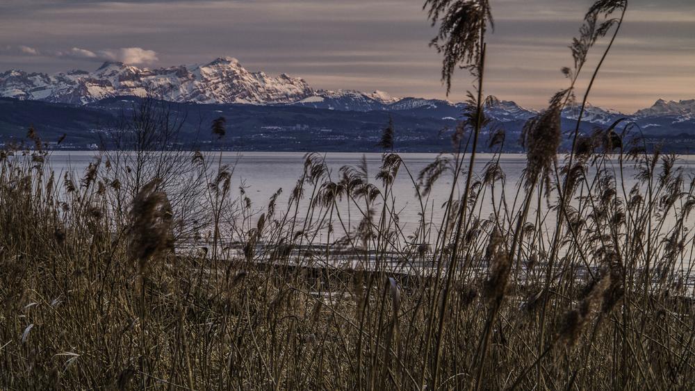 Das Ried und die Berge