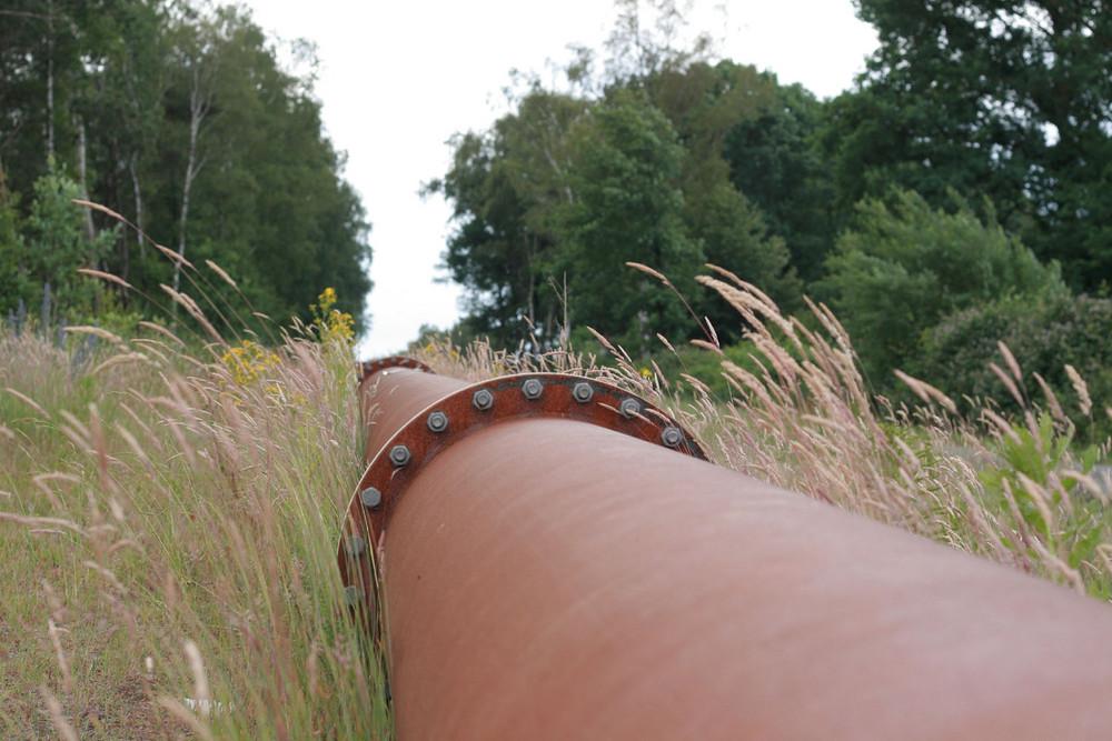 Das Rohr im Gras