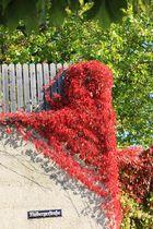 Das Rot des Herbstes