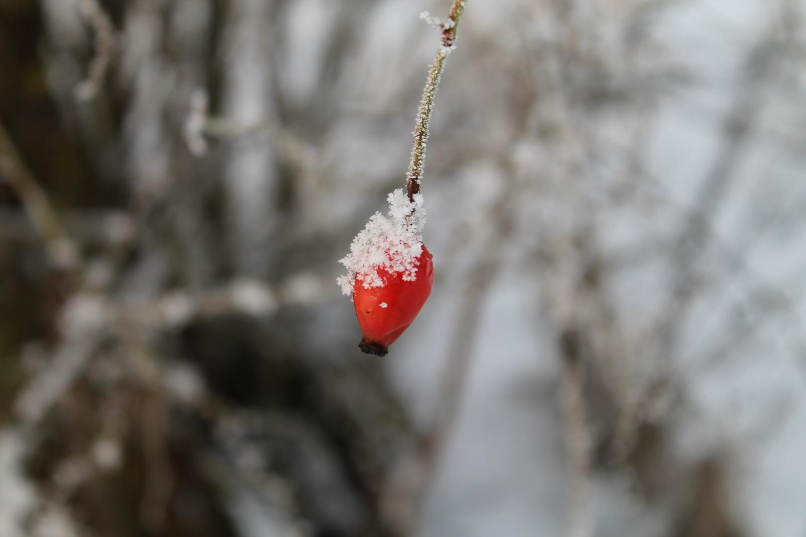 das rot im winter