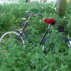 Das rote Radkäppchen allein im Wald