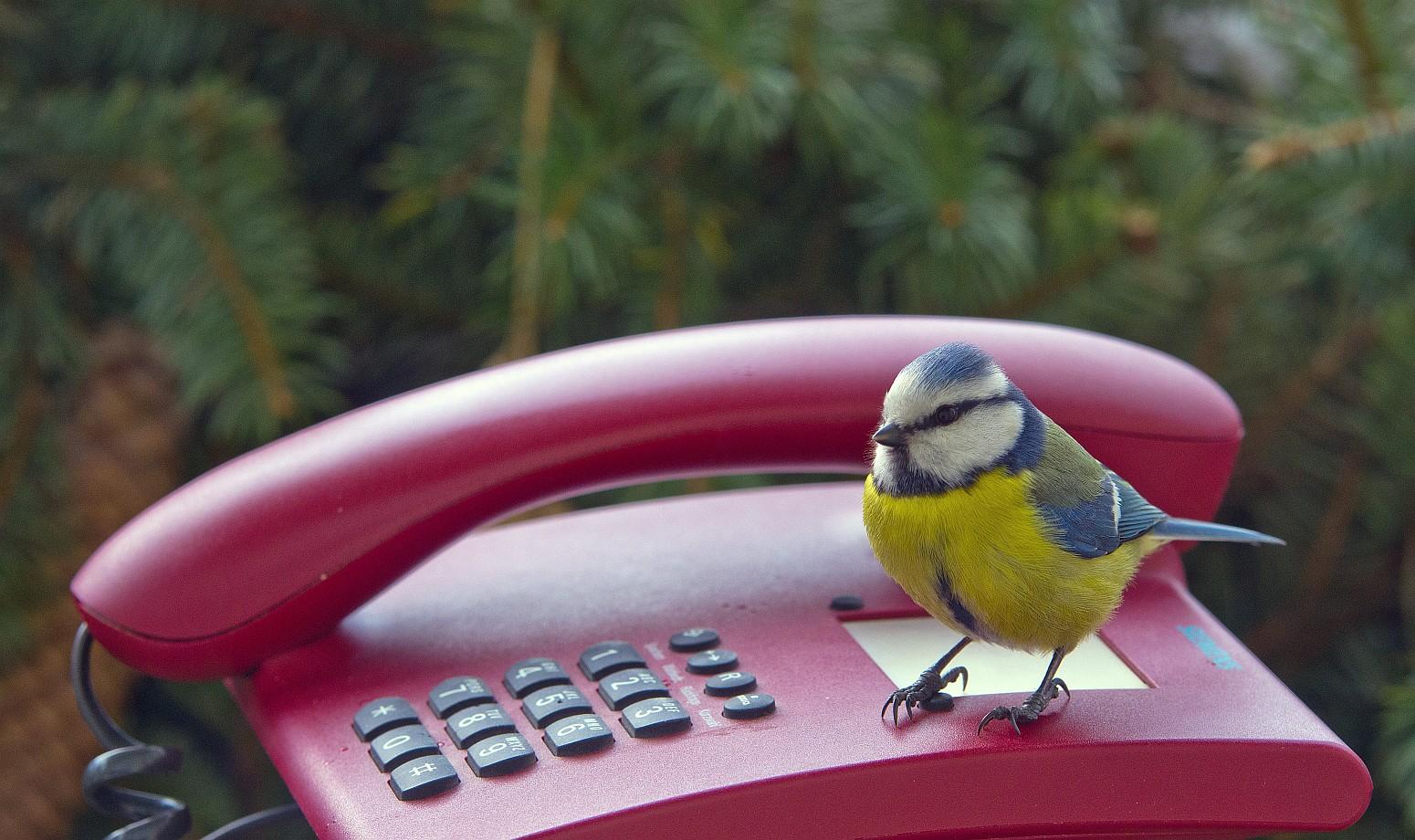Das rote Telefon .....