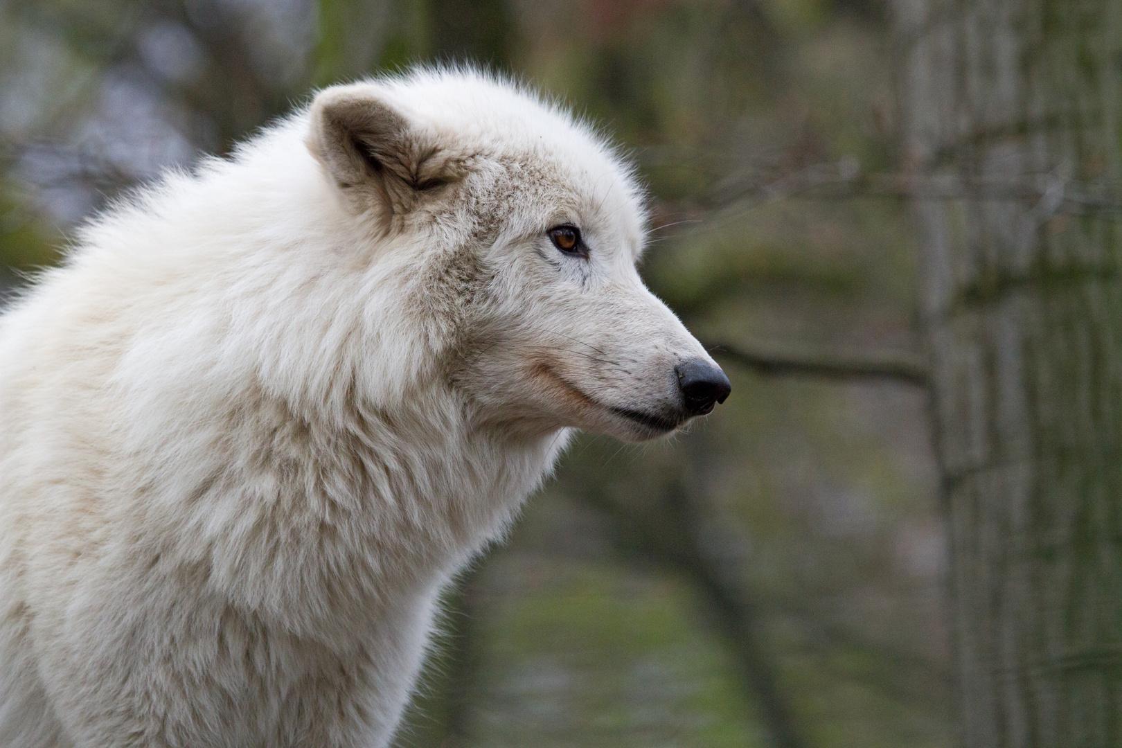 Das Schaf im Wolfspelz