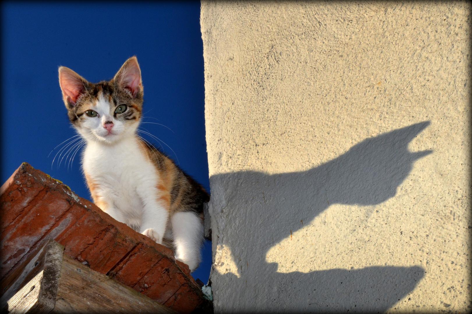 Das Schattenbild einer Katze