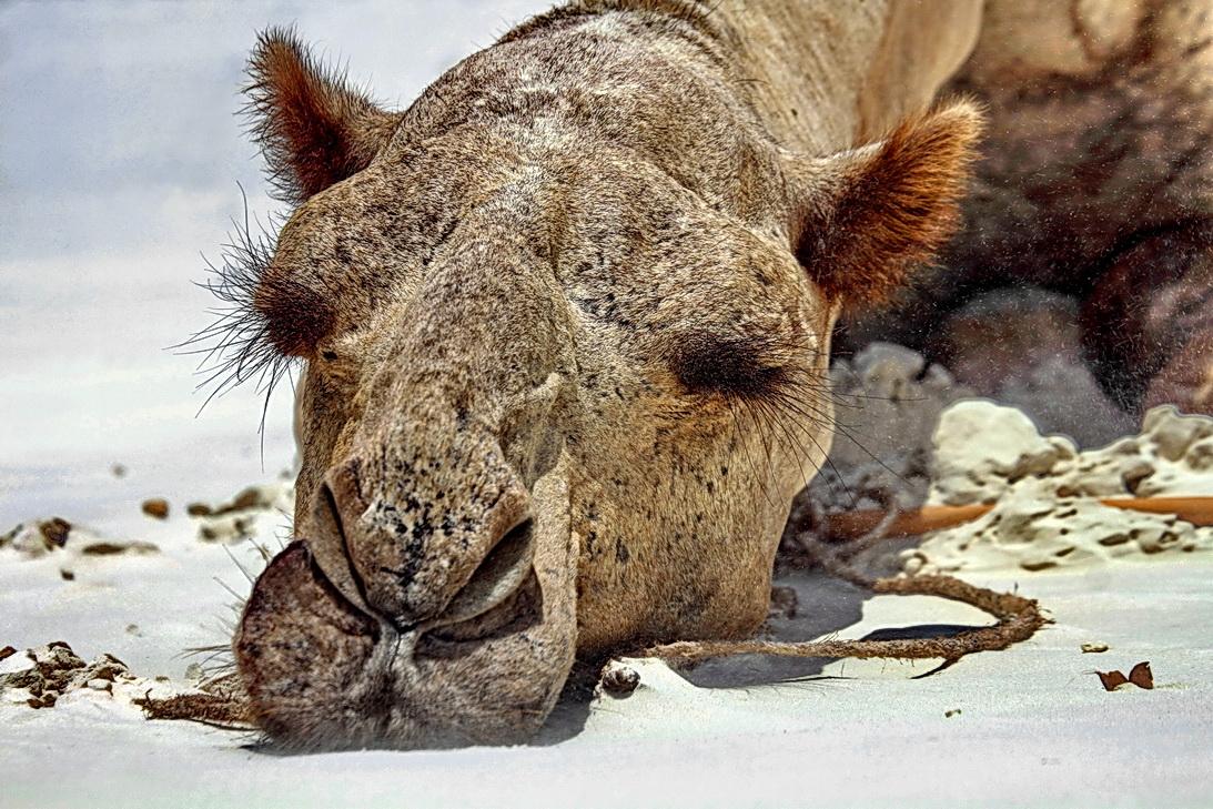 Schlafende Tiere