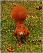Das schnellste Eichhörnchen Rheinhessens