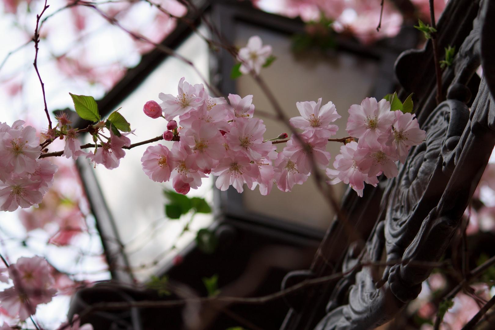 Das schöne am Frühling.....