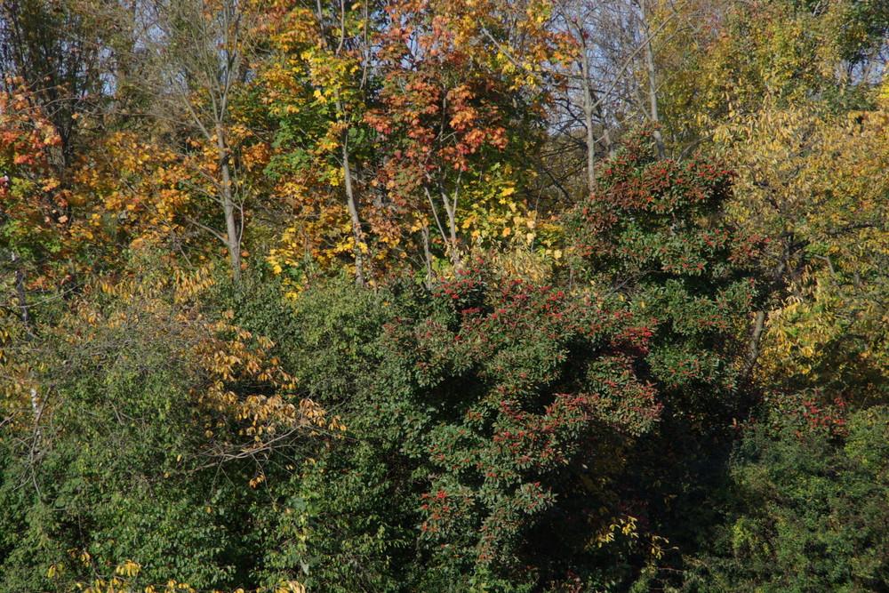 Das schönste im Jahr ist der Herbst
