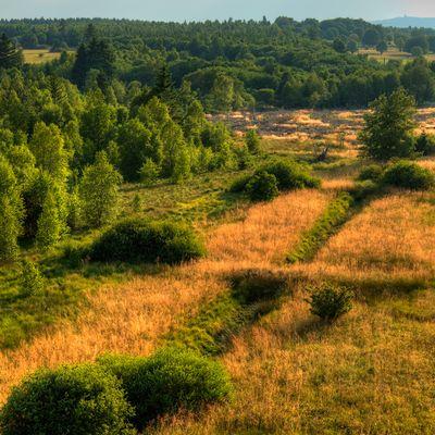 Das schwarze Moor in der Rhön
