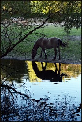 Das See-Pferdchen geht an Land